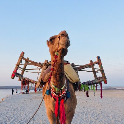 Even Camels Are Getting BOTOX® to Look Prettier